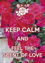 Почтовая открытка KEEP CALM and feel the scent of love