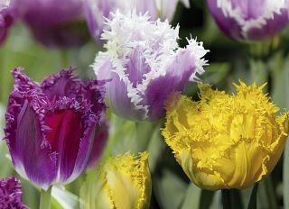 Почтовая открытка Тюльпаны. Трио