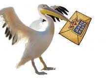 Почтовая открытка Добропочтальон пеликан